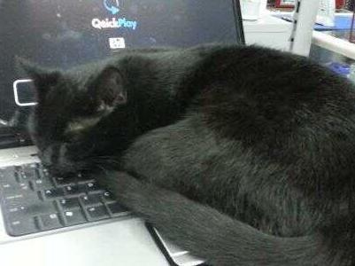 Kot leżący na laptopie 1