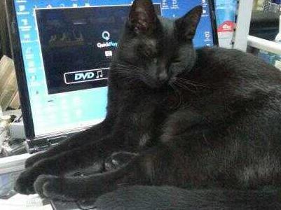 Kot leżący na laptopie 2